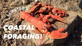 COASTAL FORAGING, Lobsters , Velvet Swimming Crabs , Cooking...