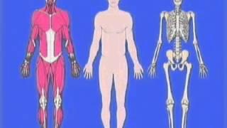Spatial Disorientation - Vestibular Illusions (Part 1)