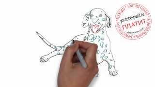 Нарисованные карандашом собаки  Как нарисовать карандашом поэтапно долматинца в зеленке