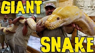 Measuring GIANT Snakes without a Snake Attack