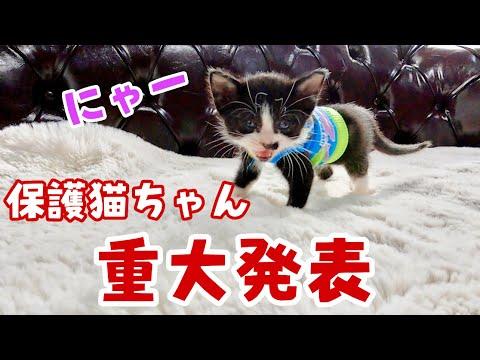 【保護猫】重大発表と手賀沼キッチンカーリベンジ ゴールデンレトリバー