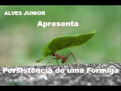 Alves Junior A Pesistência De Uma Formiga