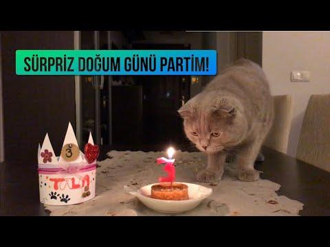 Sürpriz Doğum Günü Partisi ! ( Kedi Yaşı Hesaplama )