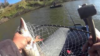 Рыбалка на реке Ишим рядом с домом тоже можно ловить