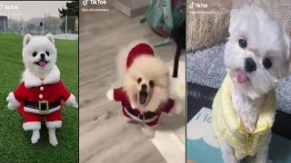 Cute animals tik tok videos | animals tik tok | Tik tok