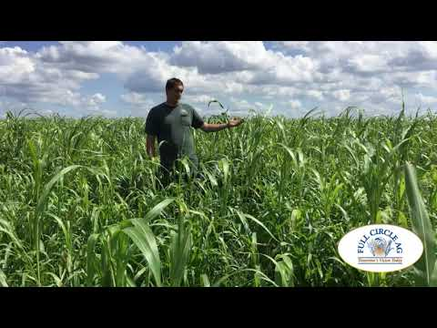 Explore Your Cover Crop Options