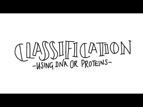Classification using DNA - AS Biology