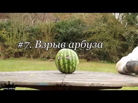 Что будет, если арбуз бросить в воду - Что будет если