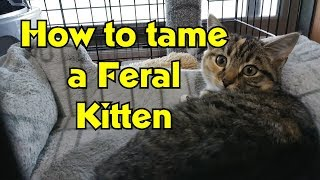 How To Tame and Socialize Feral Kittens  RMM0100