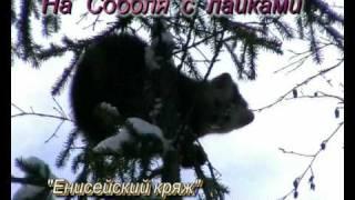 На соболя с лайками.Hunting in Russia on Sable