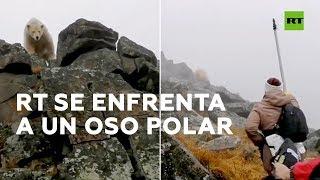 rt se enfrenta a un oso polar mientras rueda un documental
