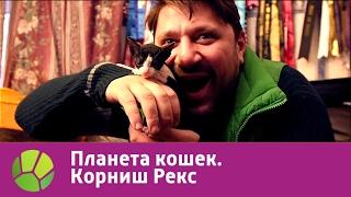 Корниш Рекс. Планета кошек | Живая Планета