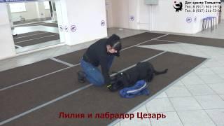 Занятие в группе (общий курс дрессировки): обучение собак команде Место.