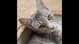 Jolene & the Country Music Kittens
