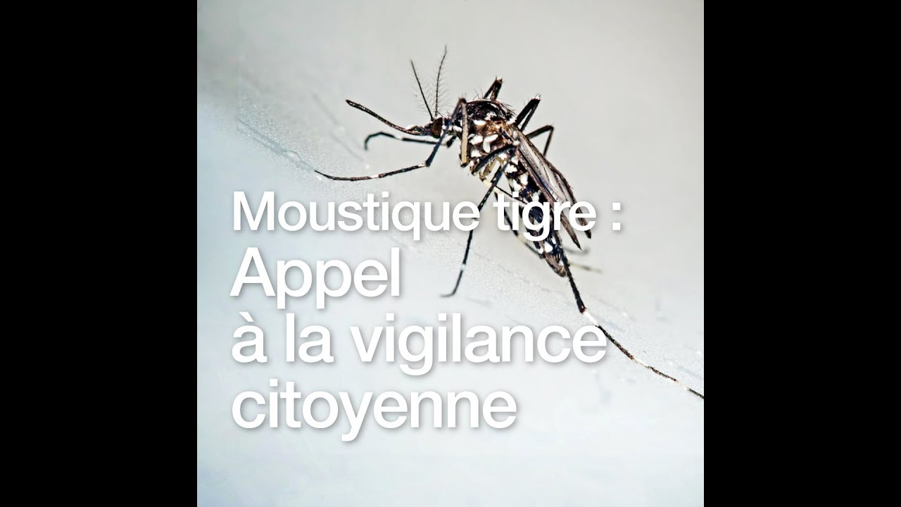 vigilance moustiques moustique tigre 2018 appel la vigilance citoyenne youtube. Black Bedroom Furniture Sets. Home Design Ideas