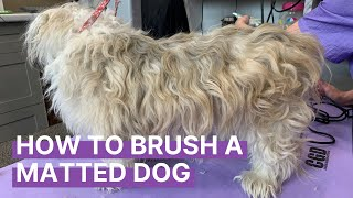 How to Brush Out a Matted Dog