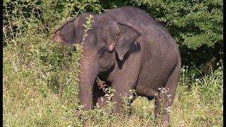 В Сочи на отдых приехали слоны