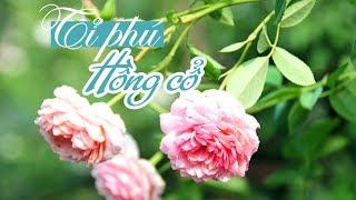 Kiếm bạc tỉ nhờ trồng hoa hồng cổ ở Hải Phòng