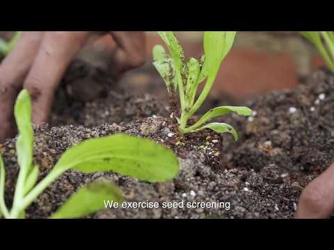 Organic sayur di S'MART -  錩農 - 有机种植蔬菜