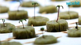 Marijuana Resort - The First - To Open In South Dakota