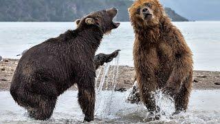 RUST - Самое сильное животное!