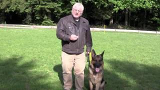 Wolfy The Dog-whisperer/no.3dog Training's Equipment