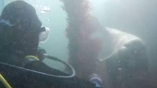 Playful Seal Part 2 - DiveMania Scuba