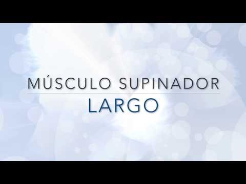 musculo supinador largo origen insercion inervacion y accion