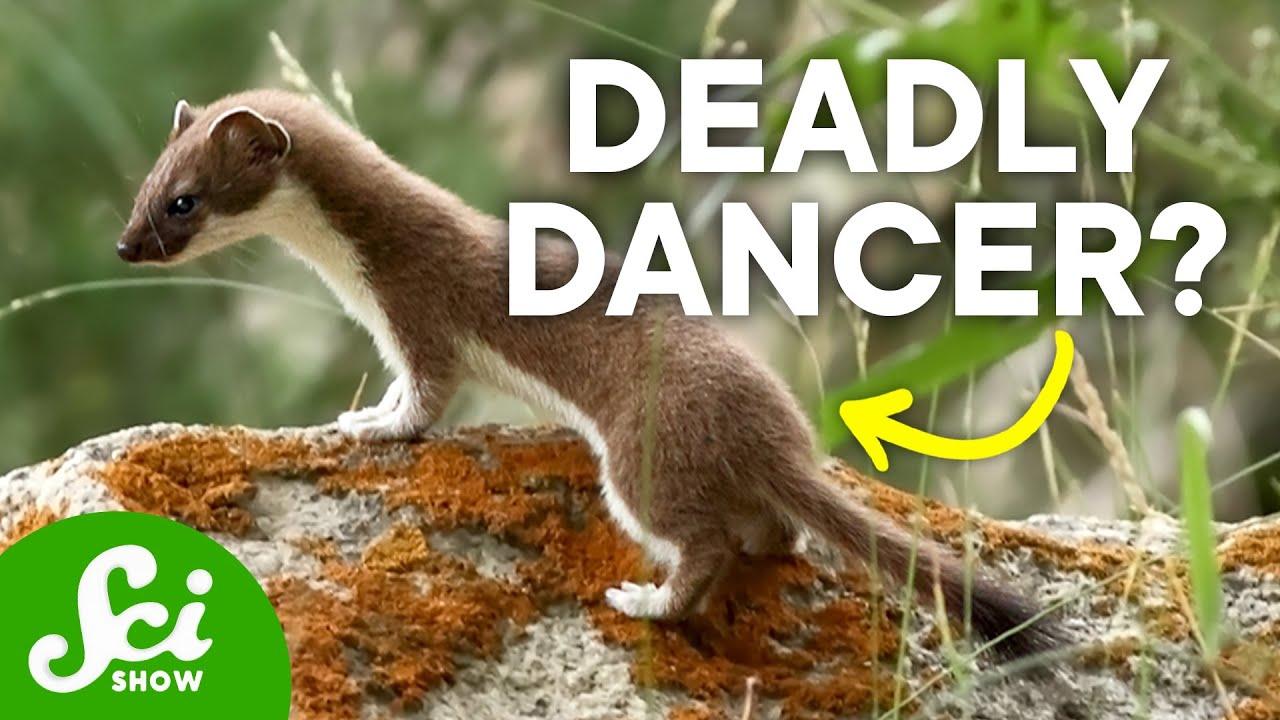 6-remarkable-ways-animals-catch-their-food