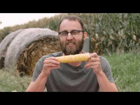 Iowa Nice Guy Taste Test: sweet corn vs field corn