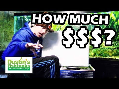 HOW MUCH DOES THAT AQUARIUM COST TO RUN? How much is your electric bill?!?