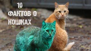 видео 10 интересных фактов о кошках