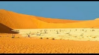 Desert Documentary HD - Kalahari Desert Wildlife Documentary