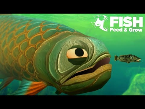 GIANT Swamp Fish EATS ALL!!! - Fish Feed Grow