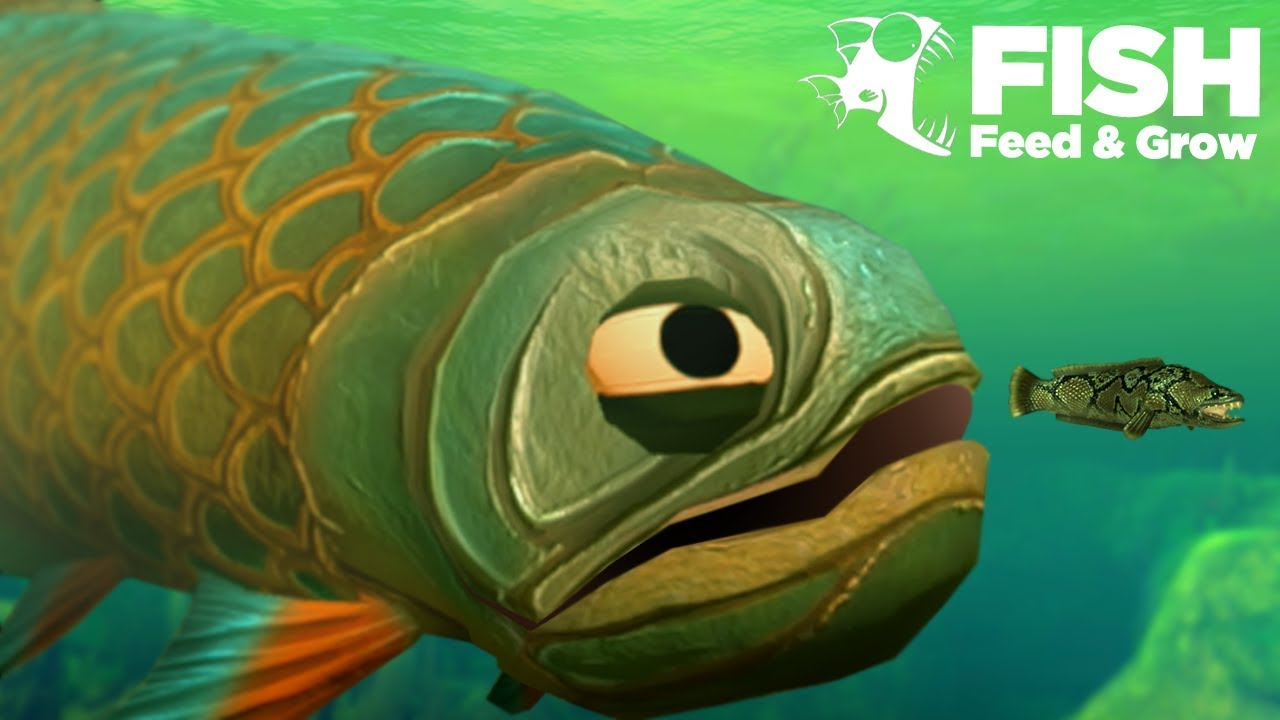 GIANT Swamp Fish EATS ALL!!! – Fish Feed Grow