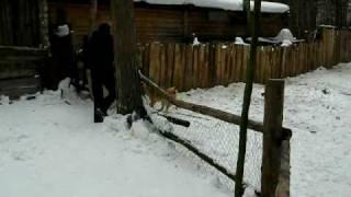 Фильмы о охотничьих собаках
