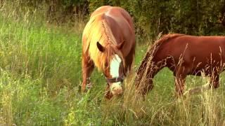 Konie Koty Krowy I Barany / Maraton Z Wiejskimi Zwierzętami- Baw się z nami