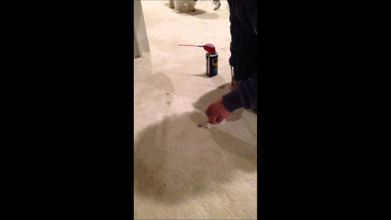 how to remove oil based wood stain paint from white carpet w wd 40 youtube. Black Bedroom Furniture Sets. Home Design Ideas
