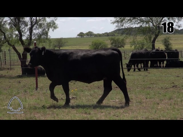 Pearcy Angus Ranch Lot 18