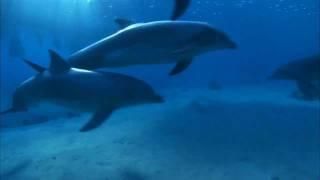 Jamie Anderson - Dolphin (Dave Angel Rework 1) (Artform)