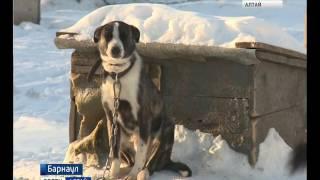 Приют «Ласка» объявил о сборе средств для оплаты операций животным
