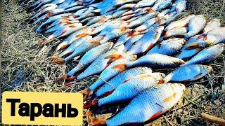 Рыбалка на Варнавинском водохранилище #Рыбалка #Тарань #Крымск #fishing #Варнавинское #Плотва #Окунь