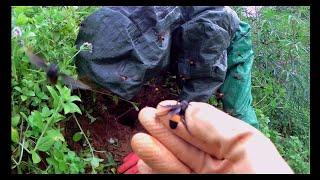Khám phá Rừng cấm và phát hiện một tổ ong mật siêu khủng.