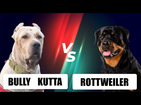 Bully kutta VS Rottweiler|ஒப்பீடு மற்றும் தகவல்கள்|comparison,informations| PETS ULAGAM TAMIL |