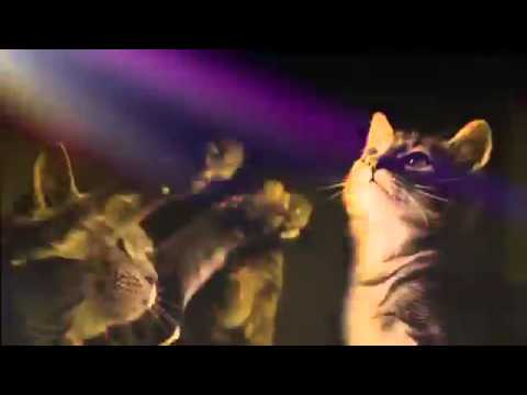Gatos bailando flashero/Dancing cats