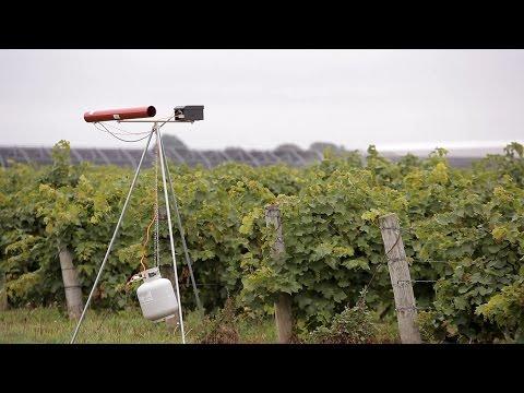Bird Bangers - How They Work | Répartition Efficace Dans Le Champ