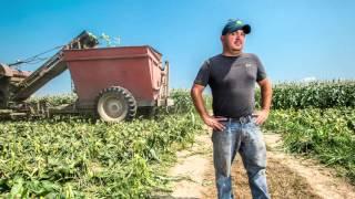 Growing corn on Blue Stem Farm