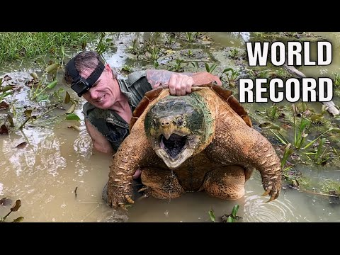 WORLD RECORD ALLIGATOR SNAPPING TURTLE! NOODLING!  300+lbs!