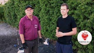 Jak sadzić truskawki na agrowłókninie - Poradnik dla ogrodników