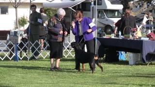 Merced Rottweiler Bob 2012 Apr 8
